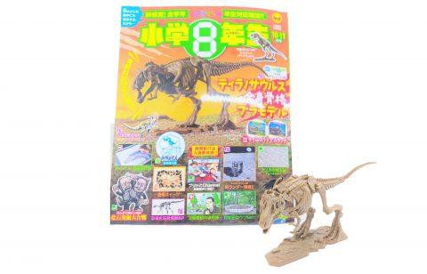 【開封レビュー】小学8年生2020年10.11月号≪特別付録≫BANDAI(バンダイ)×小学8年生コラボ ティラノサウルス全身骨格プラモデル